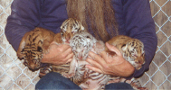 TAZZY'S KITTENS CLOSE UP.jpg (52036 bytes)